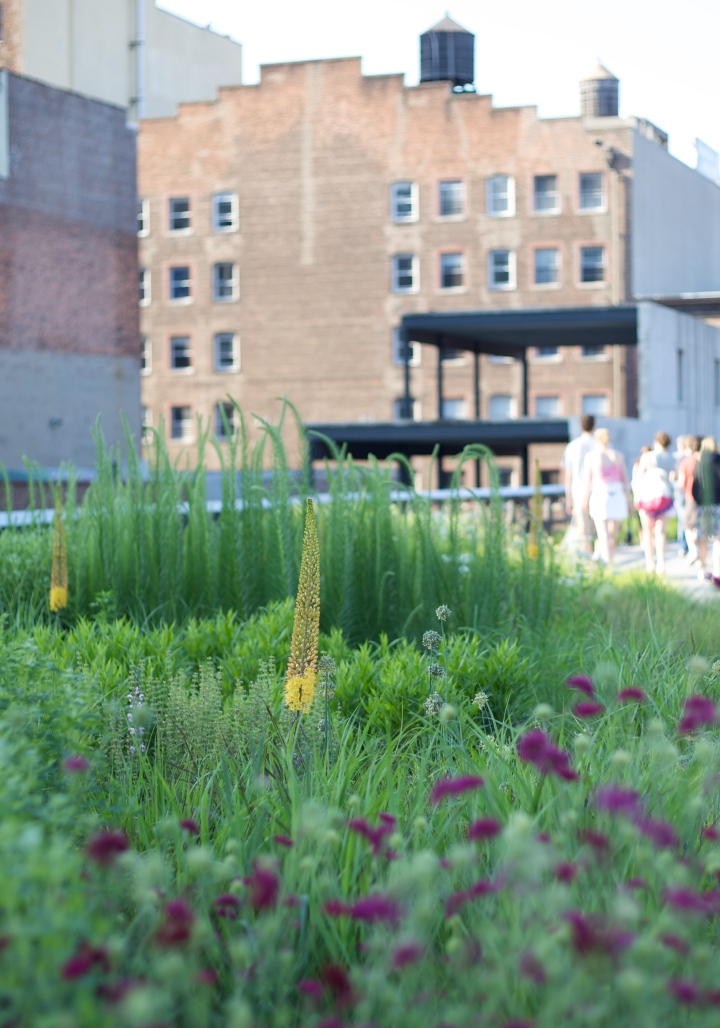 The contrast between the wild flowers and the industrial buildings makes the High Line enchanting.