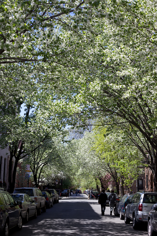 West Village in Blossom